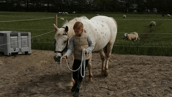 Blog een rondje paard (1)