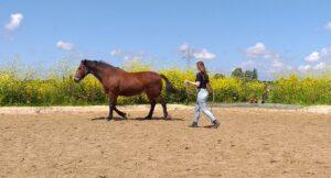 Wat is paardencoaching