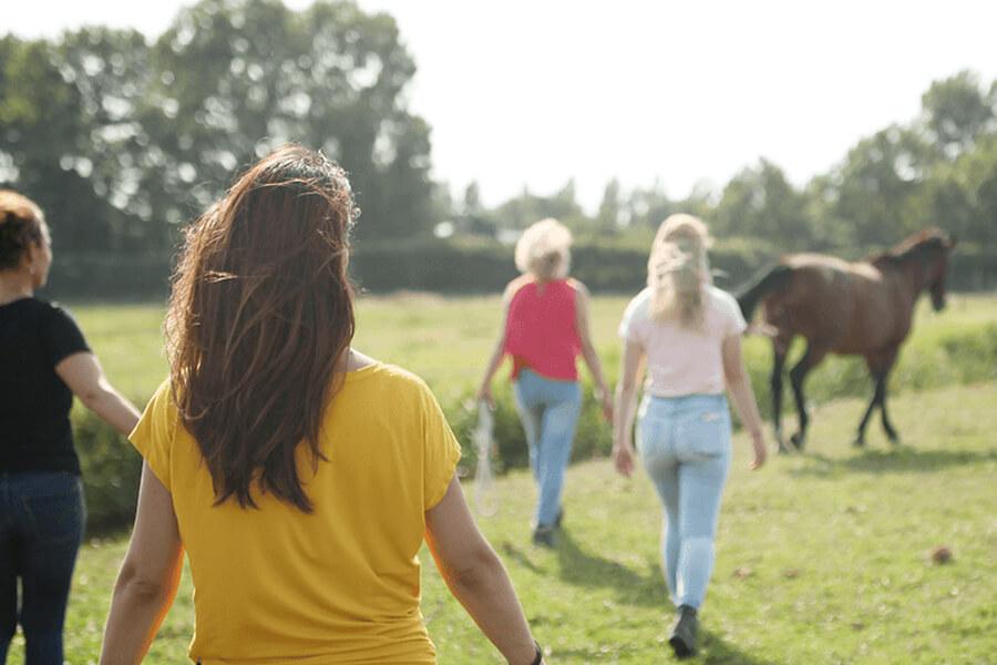 coaching met paarden kennismakingssessie