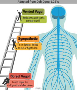 Polyvagal-Ladder-NICABM-cropped-1