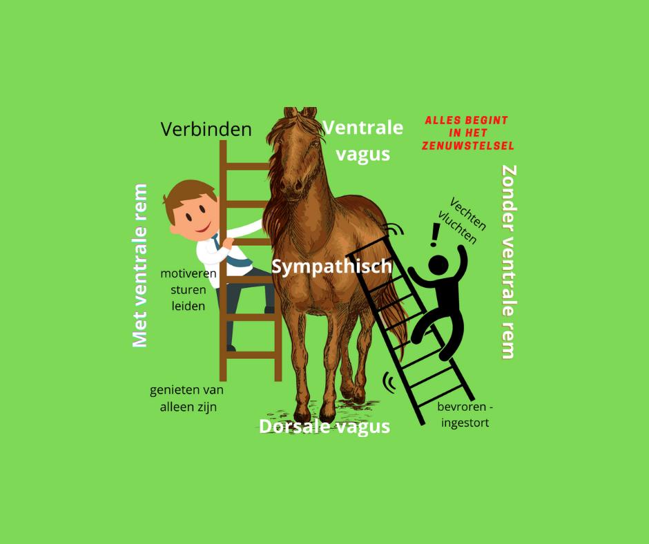 Alles begint in het zenuwstelsel met paarden